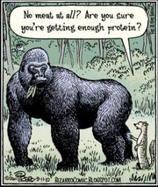 gorilla-image-from-peta